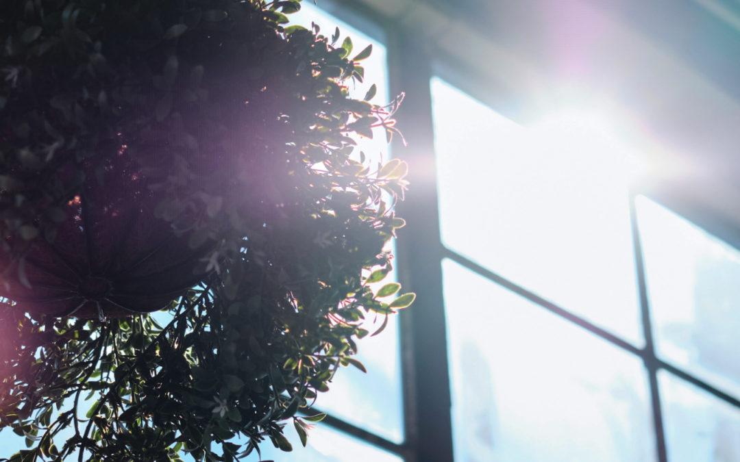 Sun shining through window